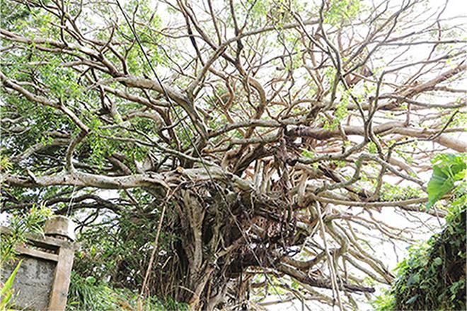 多くの天然記念物が生息する徳之島