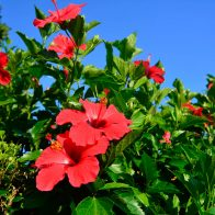 季節によって島には様々な種類の花をみることができる/奄美大島
