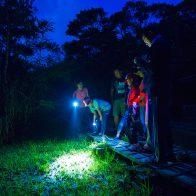 「やんばる学びの森」でのナイトツアーは子どもも大喜び/国頭村