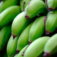 一般的なバナナよりやや小ぶりな『島バナナ』/奄美大島