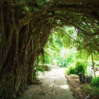 5,000坪の敷地に与論や沖縄、東南アジアの花や木々を集めた亜熱帯植物園『ユンヌ楽園』/与論島